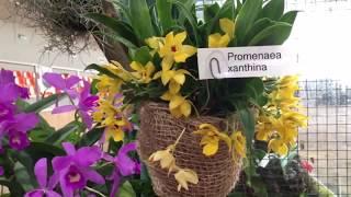 Международная выставка орхидей в Сопоте (Польша) 2017г.