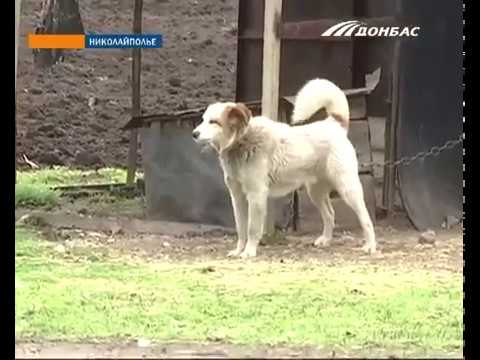 В Донецкой области волки нападают на село