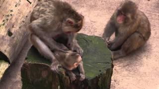旭川市の旭山動物園には137種類730点の動物が展示されています。旭山動...