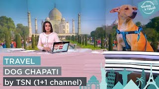 Travel Dog Chapati by TSN (1+1 channel)