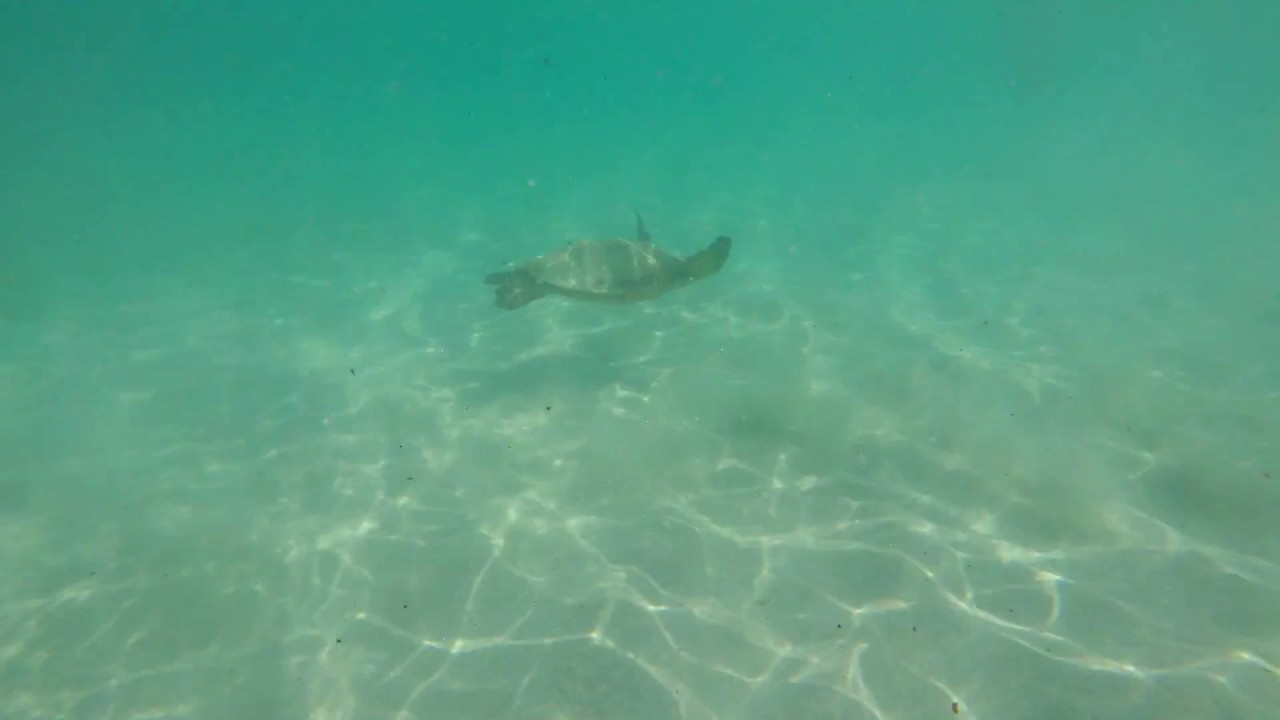 TURTLE CAUGHT BY GOPRO IN HAWAII