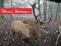 Winter Meditation / Weihnachts - Fantasiereise