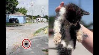 暑い日差しの中、一歩も動かず生きることをあきらめた子猫!
