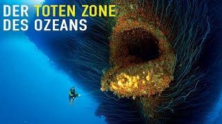 Wer lebt in der toten Zone des Ozeans?
