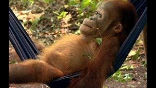 Noddy's first day at school - Orangutan Diary - BBC