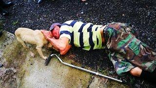 Люди проходили мимо лежащего на земле мужчины и только собака пыталась его спасти