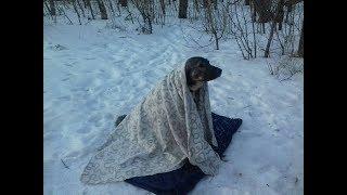 Взяли с улицы собаку а она освоилась и обнаглела за неделю