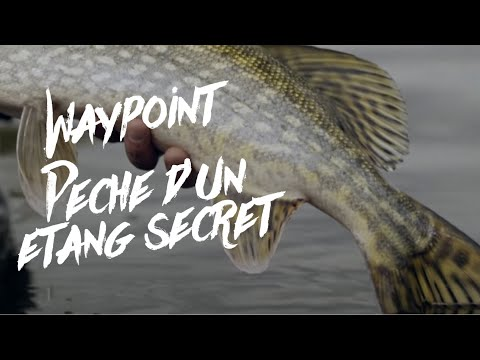 PÊCHE D'UN ÉTANG SECRET / WAYPOINT