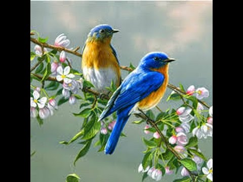 Most Beautiful Creature Video Animals And Bird Photography