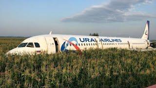 شاهد: طيور النورس تجبر طائرة ركاب روسية على الهبوط اضطراريا في حقل ذرة …