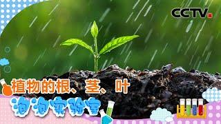 [智慧树]泡泡实验室:植物的根、茎、叶|CCTV少儿