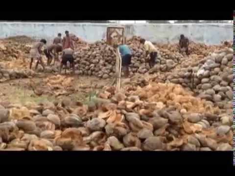 Coconut Export by Sharo Exports, Chennai