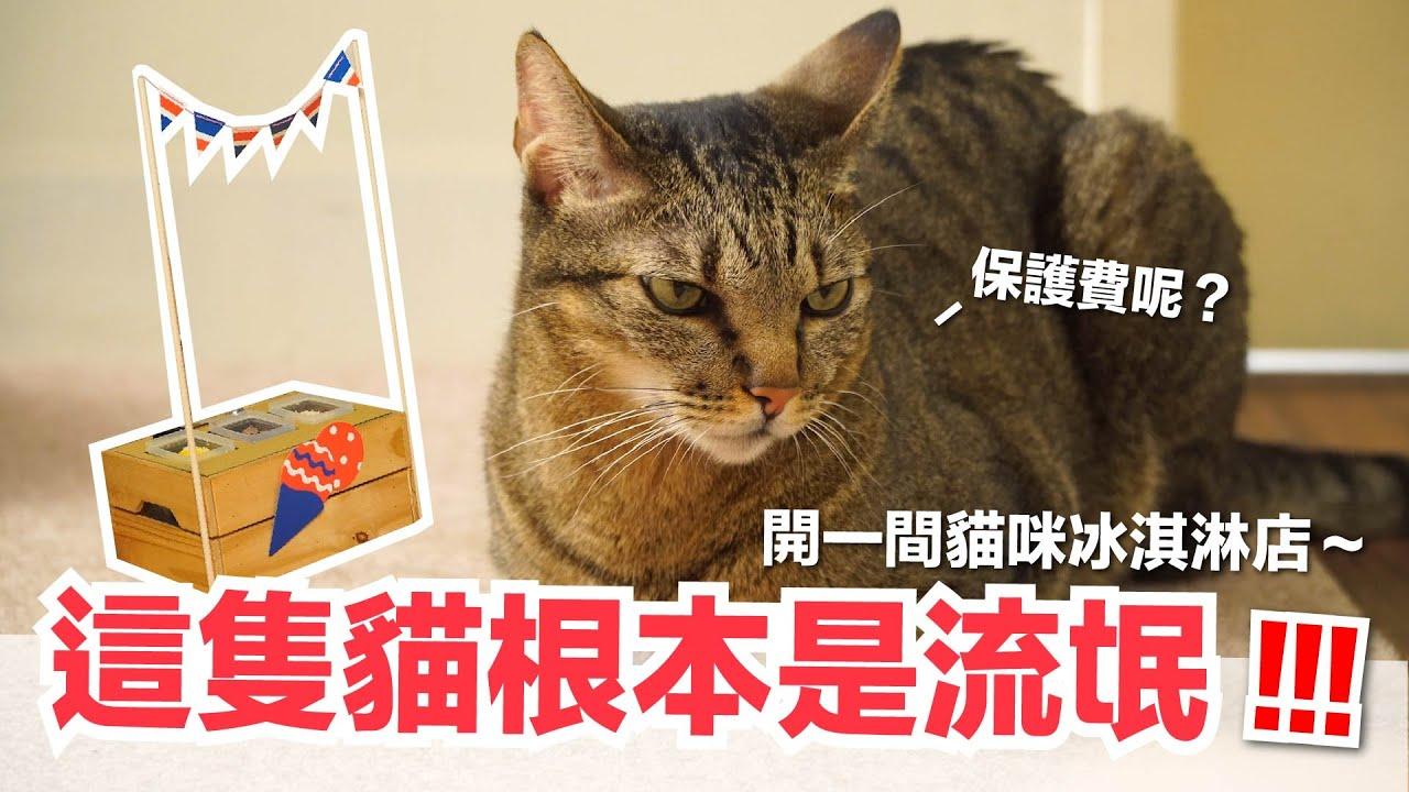 【好味小姐】這隻貓根本是流氓!開一間貓冰淇淋店~|貓副食|貓鮮食廚房EP195