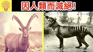 10個【因人類而滅絕】的驚人動物!太可惜了吧!?