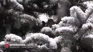 Ձմեռը մտավ իր իրավունքների մեջ  Երեւանում առատ ձյուն է տեղում
