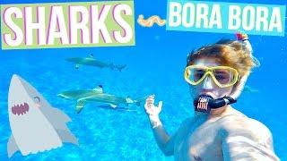 SWIMMING WITH SHARKS IN BORA BORA!