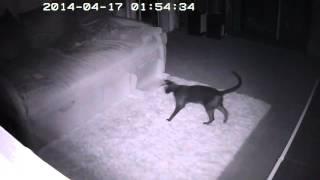 Чем занимаются кошки ночью? Часть1