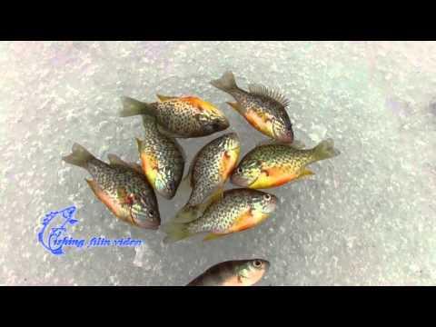 Каталог - Интернет-магазин товаров для рыбалки Эбису