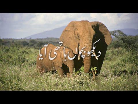 Download (Poem) Dekho Bacho Hathi Aaya - For Kids