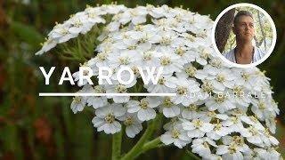 Gambar cover Yarrow - The Oil of Justice