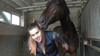 MEET THE HORSES | OT Vlog