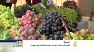 تحديات جمة يواجهها مزارعو العنب في دهوك