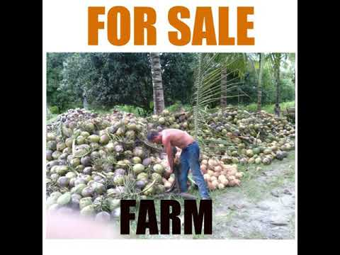 24 Hectares Coconut Farm For SALE