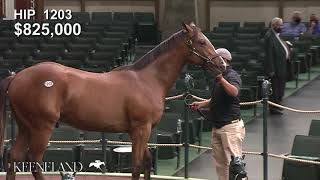 Keeneland September 2020: hip 1203 Into Mischief - Teen Pauline