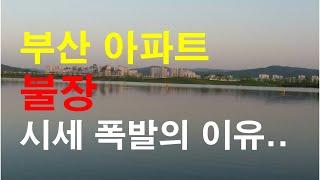 부산아파트 불장 시세 폭발의 이유