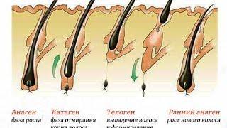 Курсы шугаринг депиляция эпиляция обучение Стадии роста волос Школа Токмакова