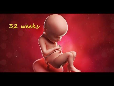 32 weeks baby heartbeat