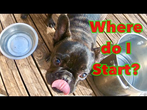 Bonding & Training Tips For New Frenchie Puppy Owners! Beginners Guide | Cane Corso Mayhem