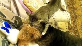 Кот и собака играют с мягкой игрушкой