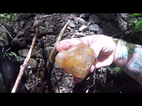 Rockhounding - Carnilien Agate And Petrified Wood HUNT