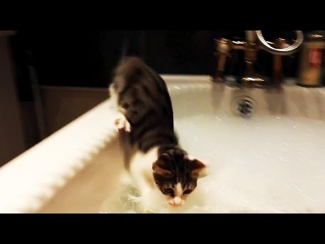 Funny Cats Afraid of Water  (FULL) [Funny Pets]