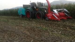옥수수 작업