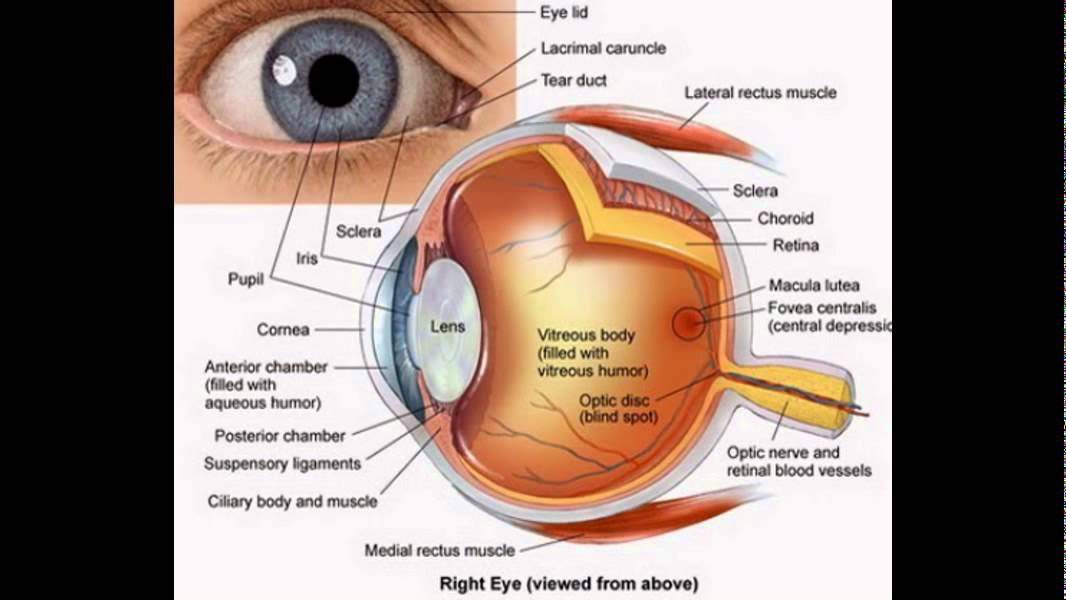 The Eye Diagram And Functions Youtube