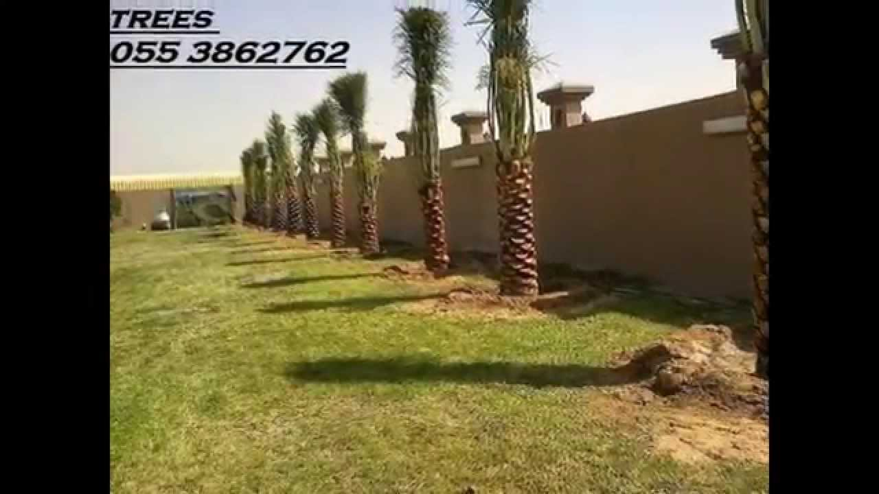 Indoor office plants artificial grass palm trees - Interior plant maintenance contract ...