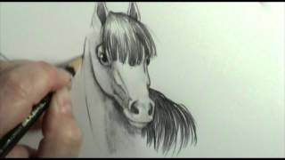 How to draw a horse mane front and back veiw