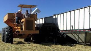 2011 CA Rice, from bankout wagon to trailer