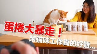 Cats are hard to work with, surprisingly our biggest enemy was...?[Daily Life of Flavor Cat] EP45