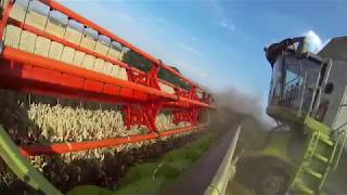 Wielkie Żniwa 2017 3x CLAAS LEXION 770TT | Świerkot | Agromax
