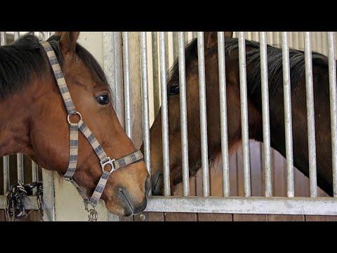 Auf den Spuren eines Pferdehändlers | Panorama 3 | NDR