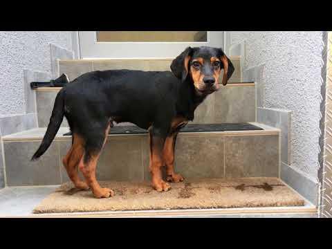 Archie, ein Hund in Not aus dem Tierschutz