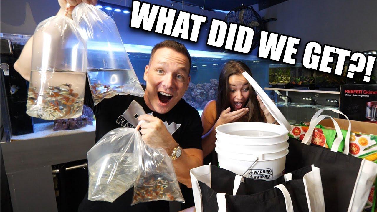 WE GOT NEW AQUARIUM FISH!!! The king of DIY unboxes fish tank supplies and aquarium fish