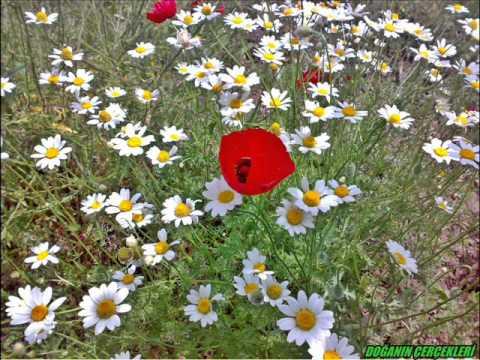 doğanin gerçekleri   çiçekler