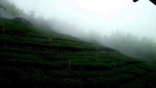 下午霧氣.