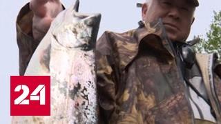 На ловлю самой вкусной рыбы Сахалина осталось две недели