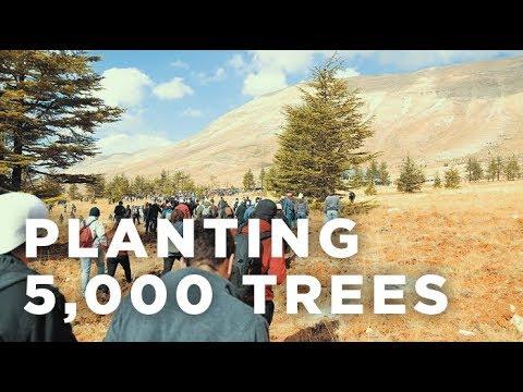 Reforestation Event – Live Love Volunteer + LRI – Lebanon