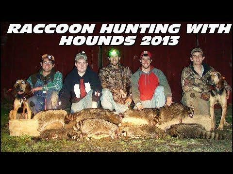 Raccoon Hunting With Hounds 2013